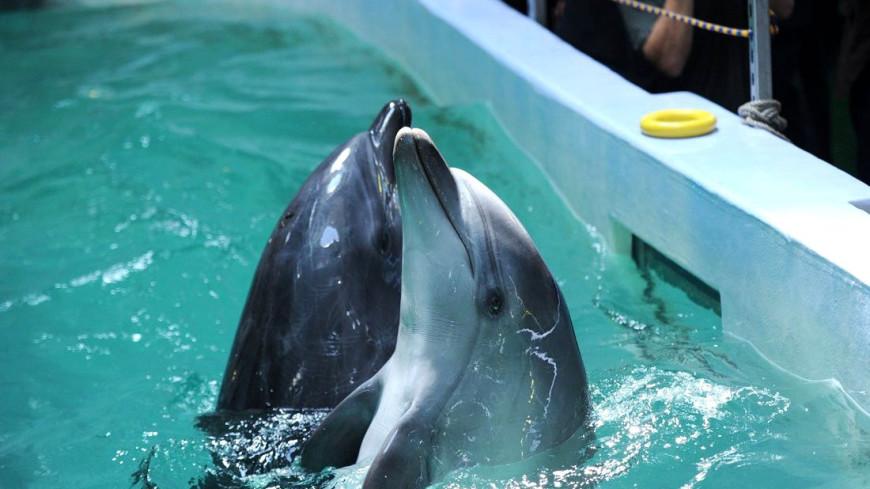 Дельфин впервые «усыновил» детеныша другого вида