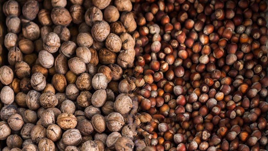 Лесные и грецкие орехи,орех, лесной орех, лесные орехи, грецкий орех, грецкие орехи, ,орех, лесной орех, лесные орехи, грецкий орех, грецкие орехи,