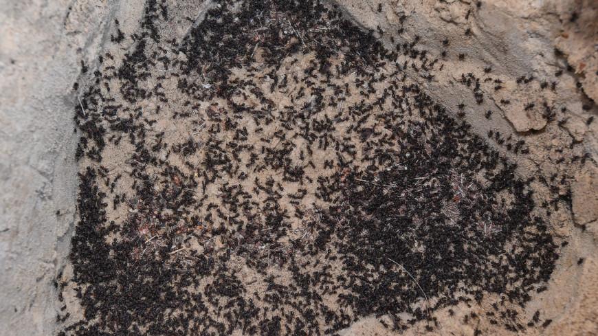 Брачные игры муравьев напугали жителей Украины