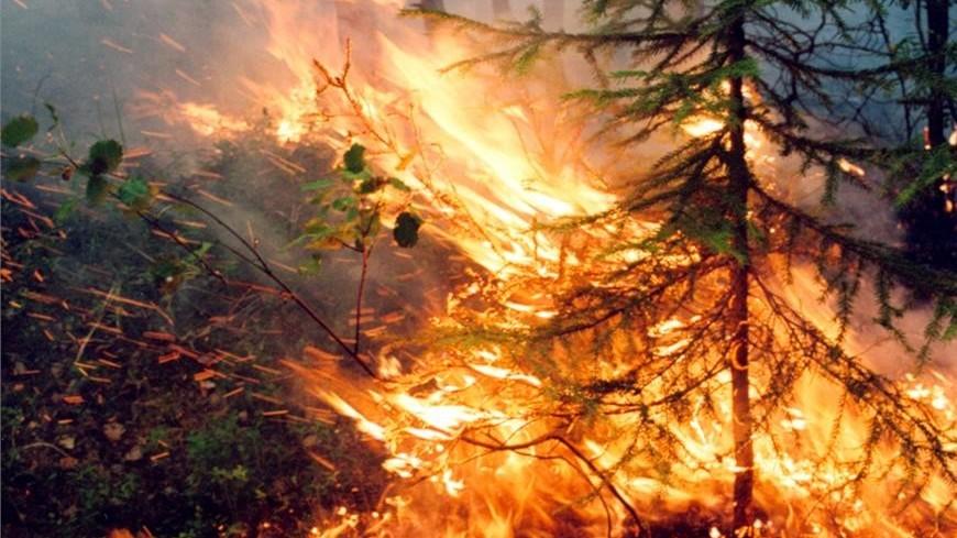 Площадь лесных пожаров в Якутии сократилась на 300 тыс. гектаров