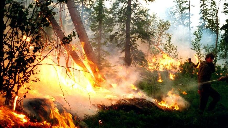 В Иркутской области площадь лесных пожаров сократилась