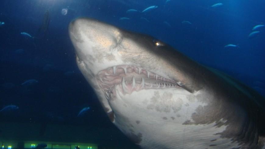 Акула дважды покусала туристку на Гавайях