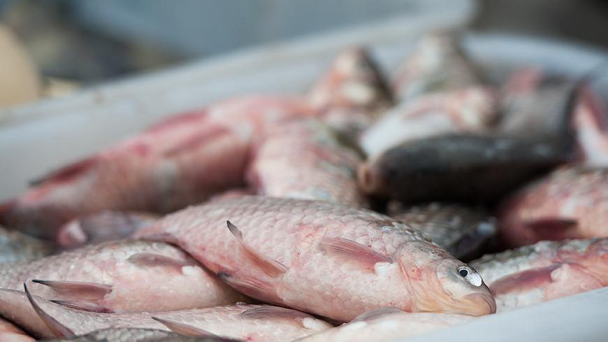 "Фото: Анна Тимошенко  ""«МИР 24»"":http://mir24.tv/, рыба"