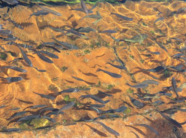 В Приморском океанариуме впервые поселились рыбы-жабы с удочками