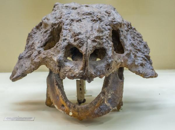В Якутии нашли останки самых северных динозавров