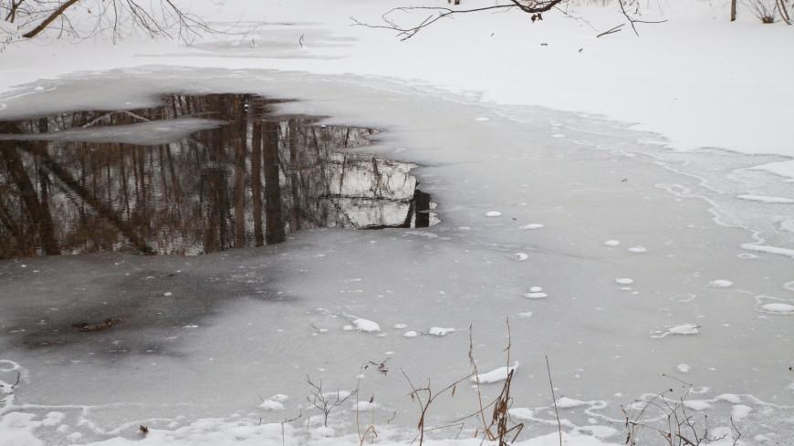 Зимний пруд в лесу