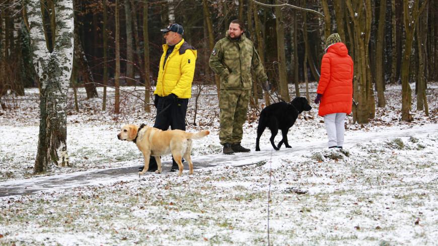 собака, собаки, выгул, выгул собак, собачники, дрессировка, животные,