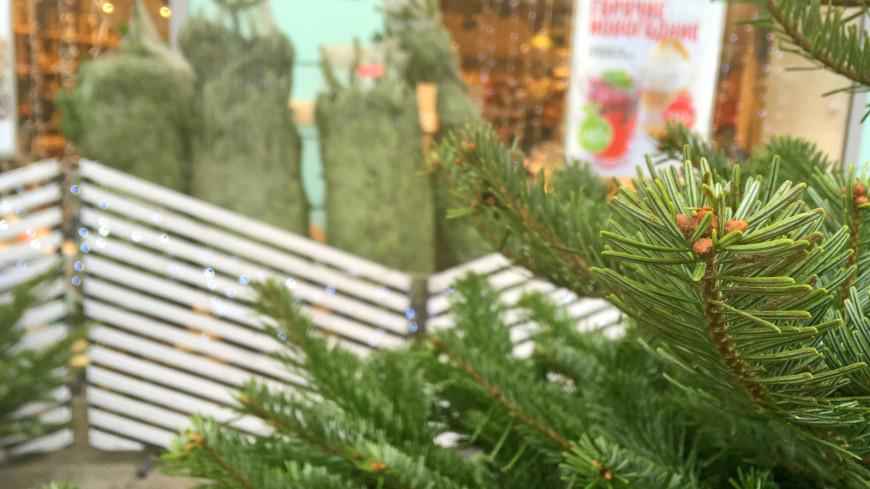 елочный базар, елка, елки, новый год, зима, базар, рынок,