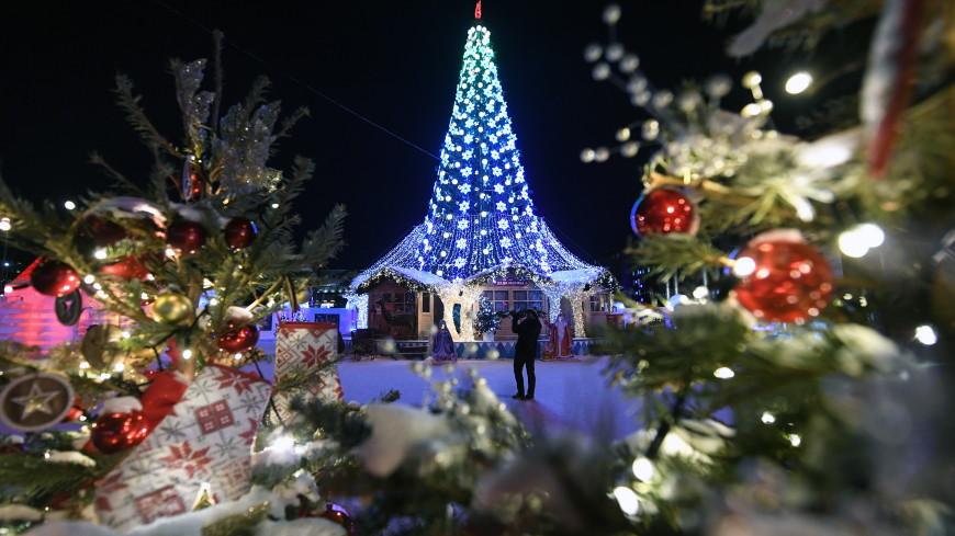 Топ-3 самых дорогих новогодних елок России