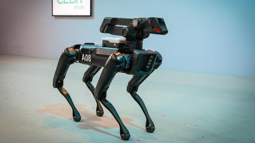 Впервые в американскую полицию трудоустроили собаку-робота