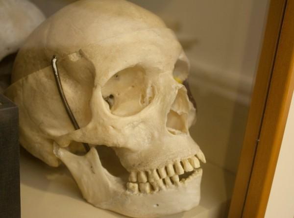В Темзе обнаружили человеческий череп возрастом пять тысяч лет
