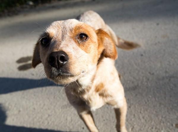 Собака вернулась к хозяйке спустя почти 100 дней блуждания в дикой природе