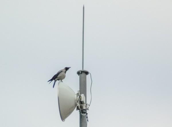Без «серых» тарелок: Казахстан избавляется от нелегальных антенн