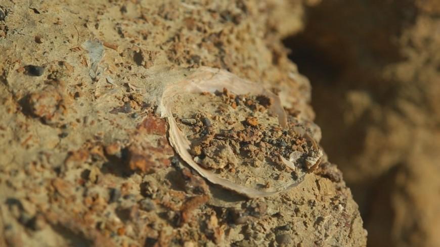 В Африке нашли следы древнейших многоклеточных существ