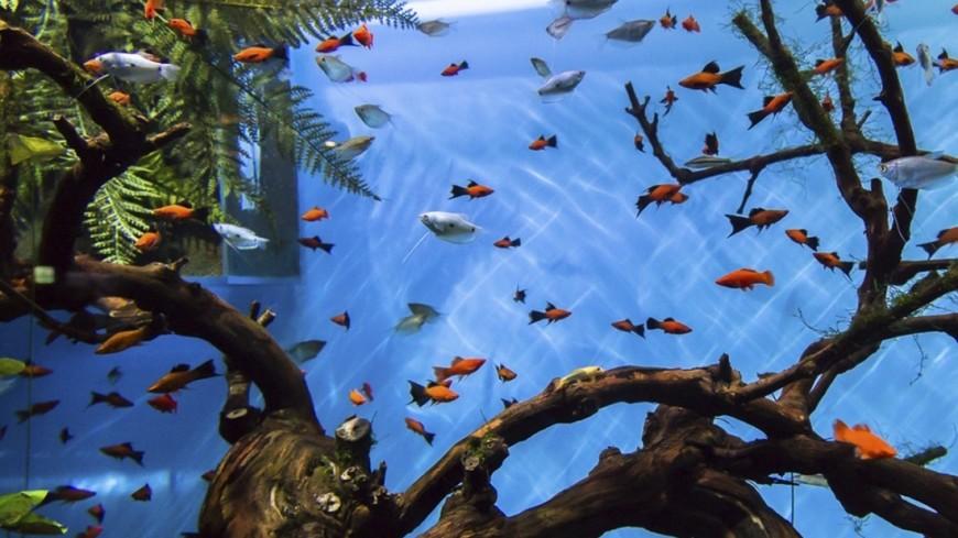 Коралловые рыбки смогли узнать себя в зеркале