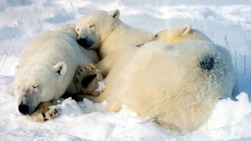 Белый медвежонок из Берлинского зоопарка оказался девочкой