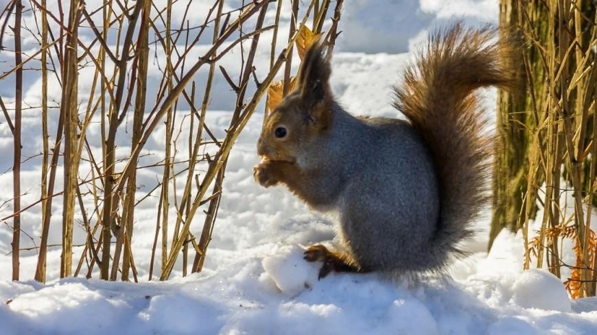 Зима (снег, сугроб, холод, мороз, белка, лес)