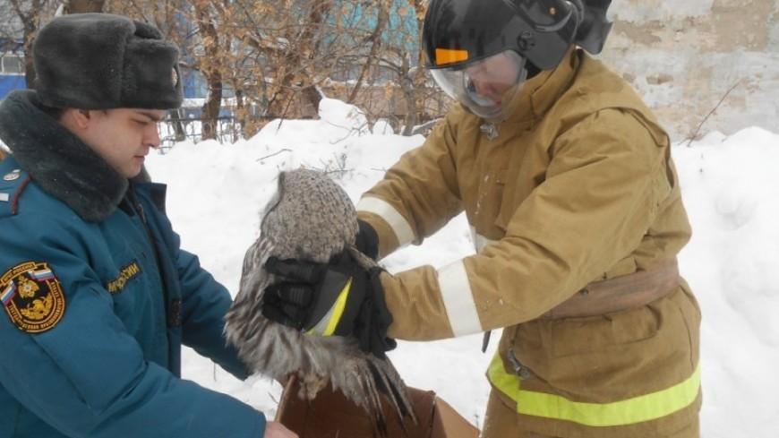Пожарные в Свердловской области спасли голодную сову