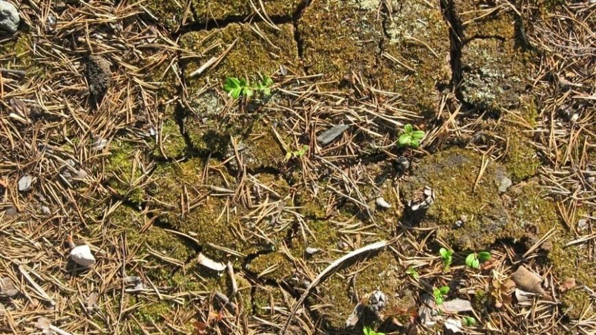 "© Фото: ""Елизавета Шагалова, «Мир 24»"":http://mir24.tv/, засуха, земля, песок, трава"