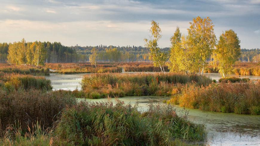 «Лосиный остров» расширят почти на 2 тыс. га за счет лесов Подмосковья