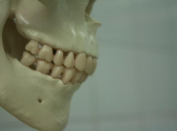 Ученых поразили зубы ребенка, который жил 100 тыс. лет назад