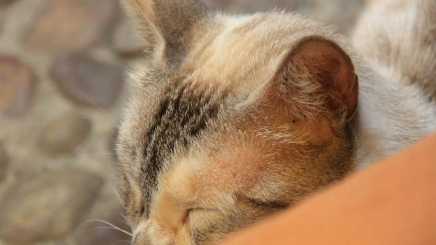 """Фото: Мария Чегляева, """"«МИР 24»"""":http://mir24.tv/, кот, кошка"""
