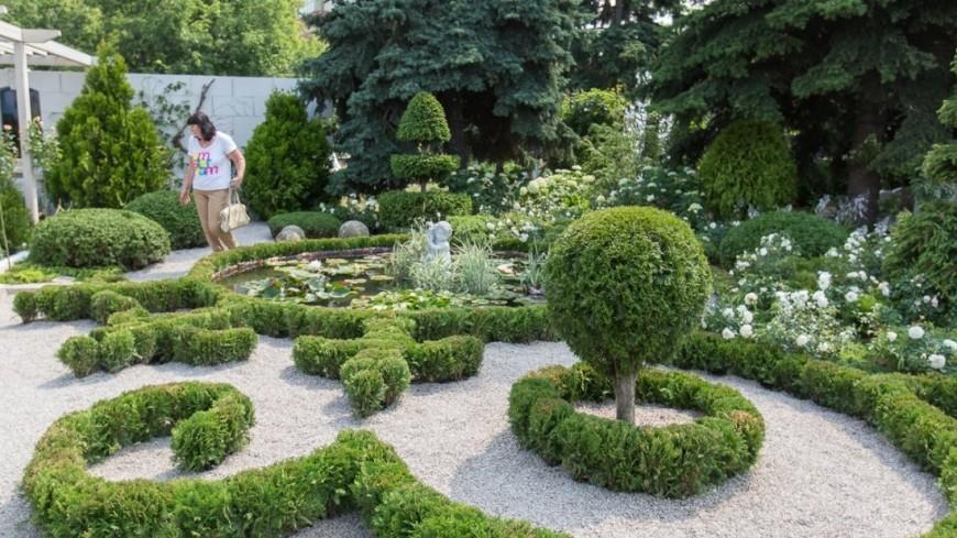 "Фото: Алан Кациев (МТРК «Мир») ""«Мир 24»"":http://mir24.tv/, кусты, сад, участок, огород, цветы"