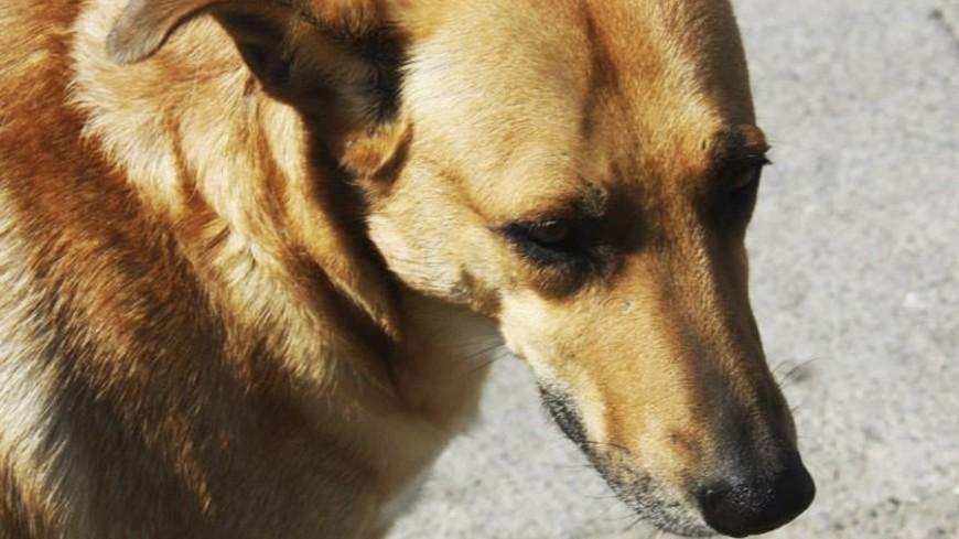 "Фото: Мария Чегляева, ""«Мир24»"":http://mir24.tv/, двогняга, собака"