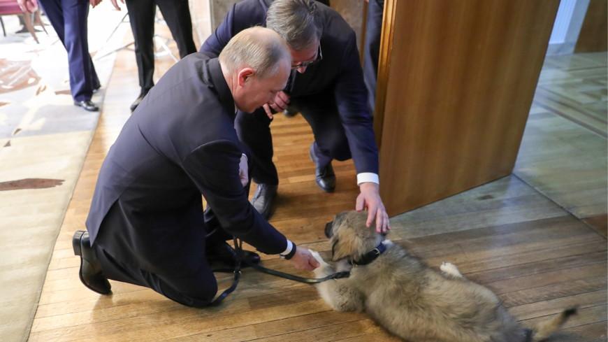 Вучич подарил Путину щенка югославской овчарки по кличке Паша