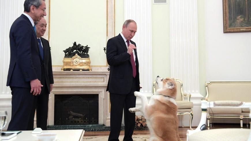 Друзья президента: каких собак дарили Путину