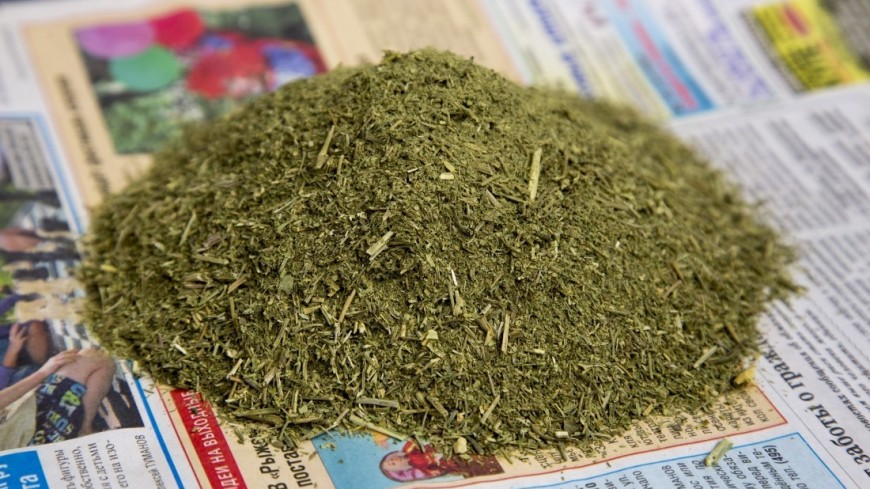 В жилом доме в Доминикане нашли 60 кг марихуаны и сотни таблеток экстази