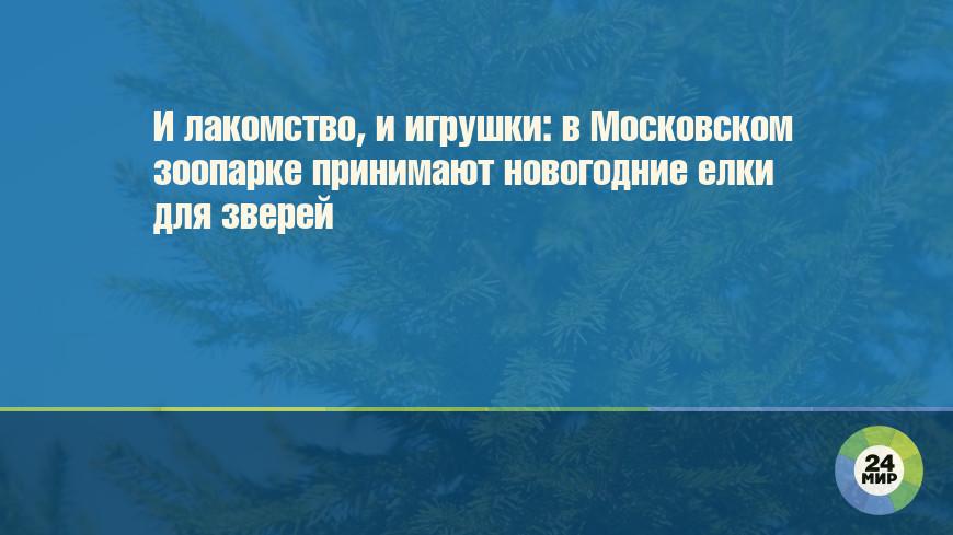 И лакомство, и игрушки: в Московском зоопарке принимают новогодние елки для зверей