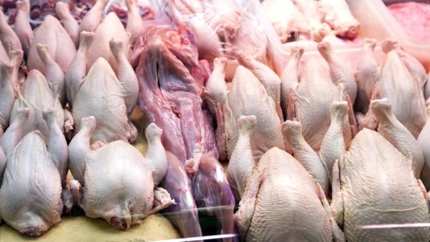 В Россию запрещен ввоз птицы из Калифорнии из-за болезни Ньюкасла