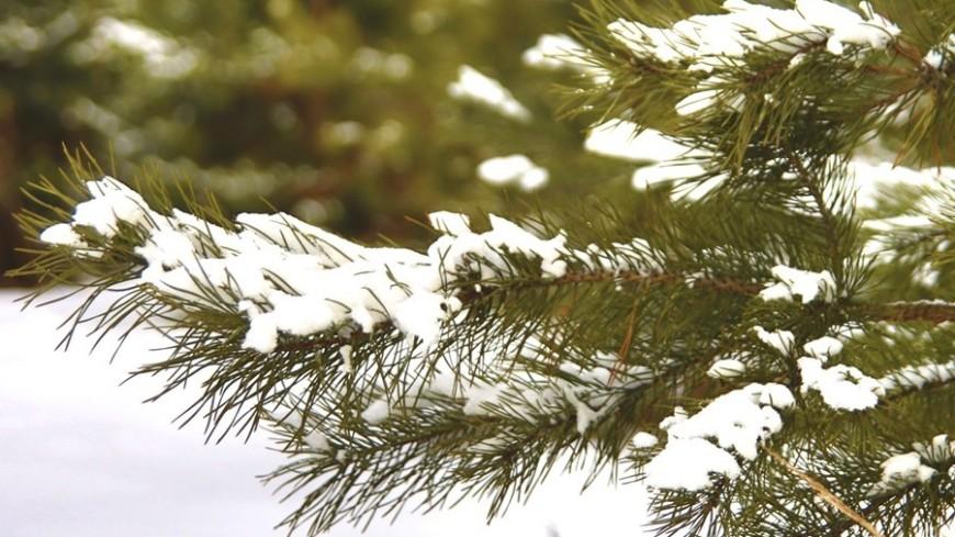 "Фото: Татьяна Константинова, ""«МИР 24»"":http://mir24.tv/, елка, зима"