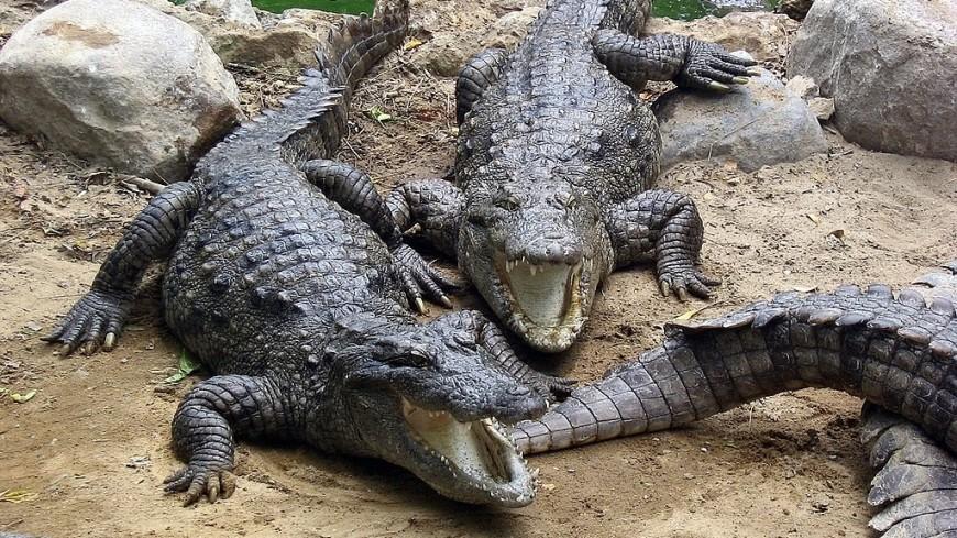 Крокодил в Индонезии съел женщину-биолога