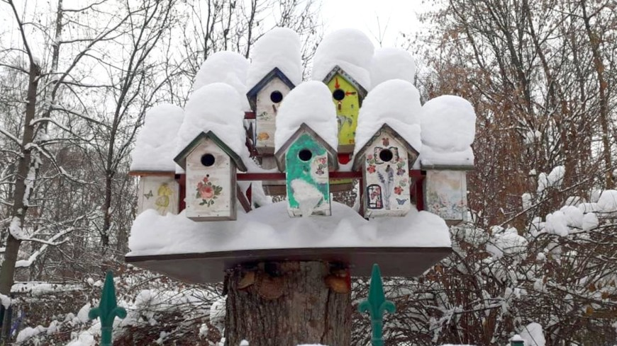 В парке «Сокольники» появились специальные площадки для кормления птиц