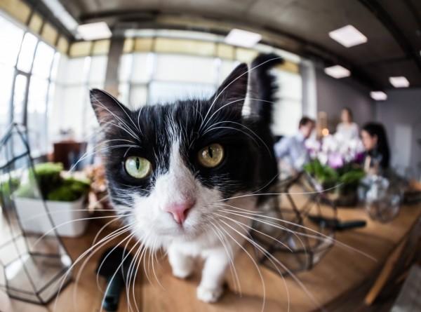 Храбрая кошка спасла семью от кобры
