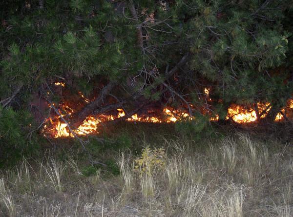 На горе Жека Батыр в Казахстане загорелся лес