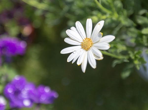 Мужчина несколько месяцев поливал искусственный цветок и рассмешил Сеть