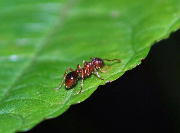 От насекомых до синтетического мяса: эксперты рассказали, какой будет еда будущего