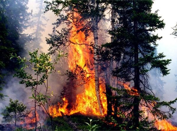 Дым из Красноярского края добрался до Томска
