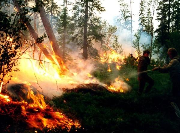 На территории России горят 130 тысяч гектаров леса