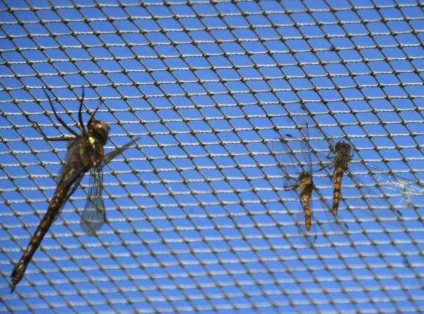 Массовая гибель насекомых – глобальная проблема. В чем причина?