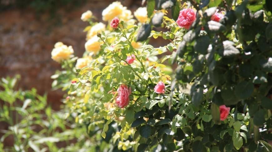 """Фото: Мария Чегляева, """"«МИР 24»"""":http://mir24.tv/, дерево, природа, деревья, цветы, погода"""