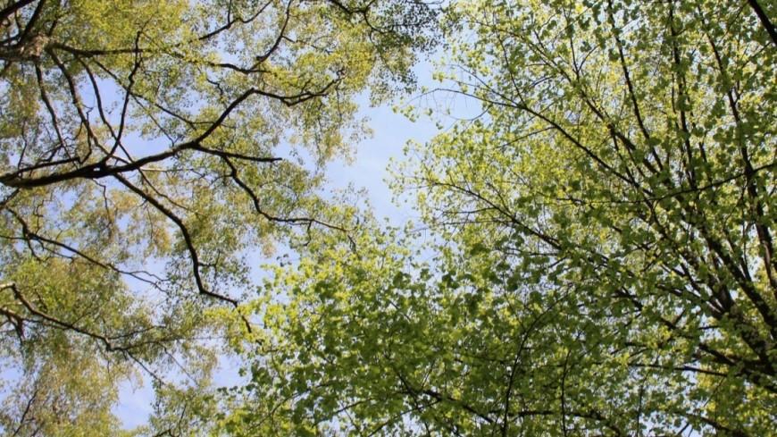"""© Фото: Мария Чегляева, """"«МИР 24»"""":http://mir24.tv/, дерево, природа, погода, весна, цветы, деревья"""