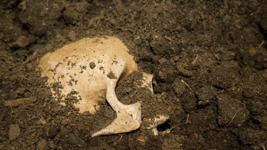 На острове Ява найдены древнейшие останки человека