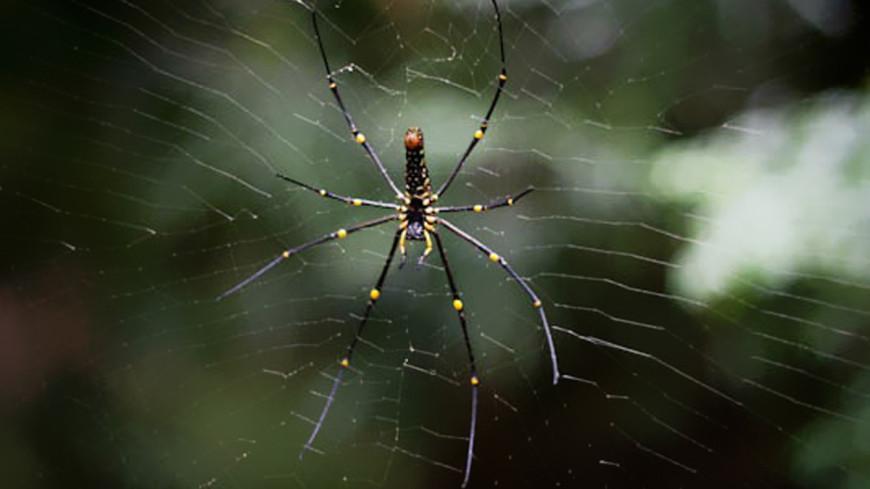 """Фото: Светлана Родина, """"«МИР 24»"""":http://mir24.tv/, паук"""