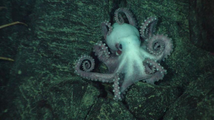 Туристы поймали маленького осьминога и чудом избежали гибели