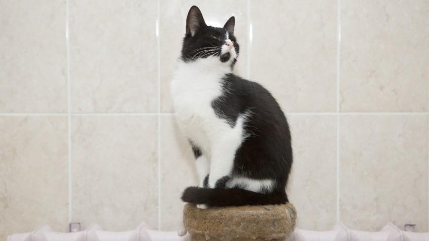 Томские пожарные реанимировали кота