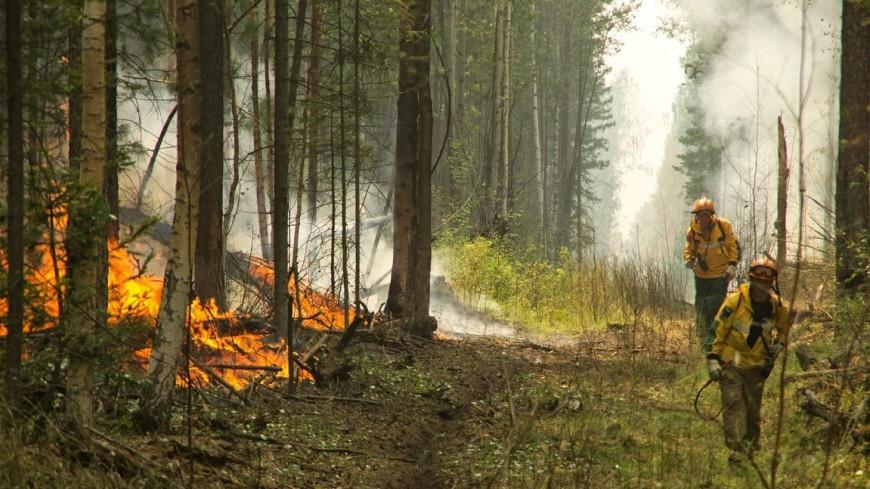 В Иркутской области из-за лесных пожаров ввели режим ЧС